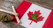 National Cannabis Survey